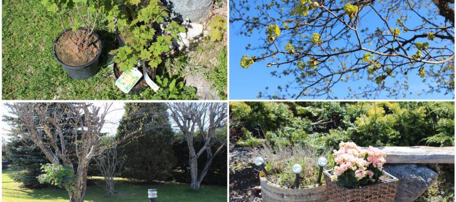 Helena-Reet: Puutarhapuuhia ja ensimmäiset ostokset kauppapuutarhasta