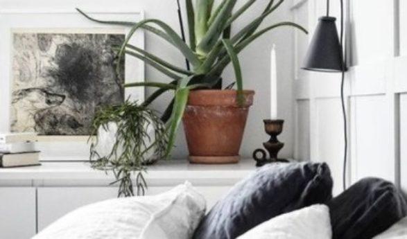 NÄMÄ KASVIT PUHDISTAVAT ILMAA, TUOVAT RAUHAA JA HYVÄN UNEN – 10 HUONEKASVIA, jotka meillä tulisi makuuhuoneessa olla