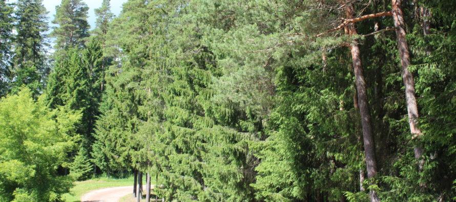 Tutkimus: Metsäkadon vähentäminen ja metsityksen lisääminen auttaisivat osaltaan Suomea saavuttamaan ilmastotavoitteensa
